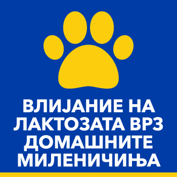 Лактози и домашни миленичиња